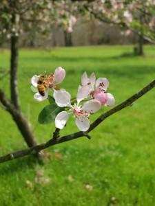 Springtime prayer