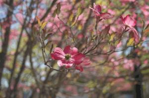 Spring devotional