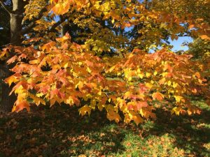Autumn Devotional - Transformation
