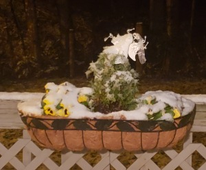Basket of pansies covered in ice