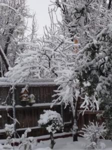 Snowy trees in the backyard