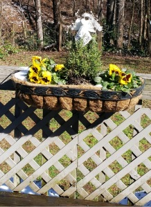 Basket of pansies looking good after ice has melted