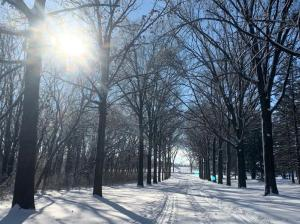 Sunny snow-covered road through the trees