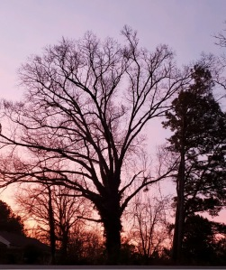 Beautiful winter tree against a sunrise sky